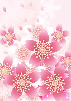 벚꽃의 꽃 88