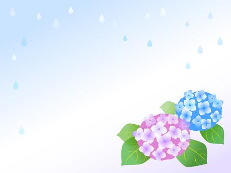 繡球花,雨