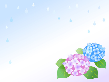16. hydrangea, rain