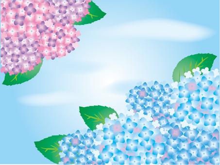 Hydrangea 2 colors