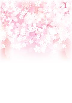 さくらの花194