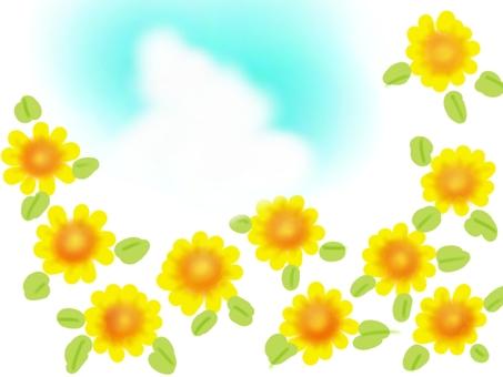 Sunflower and summer sky