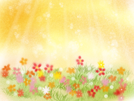 Flowering blossoming sunset