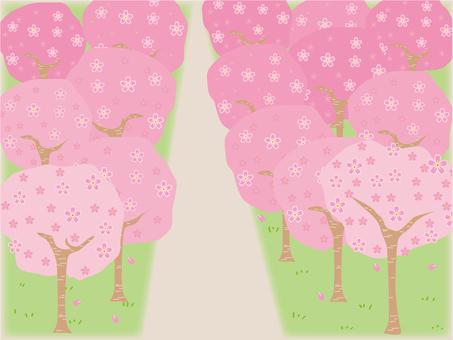 벚꽃의 숲
