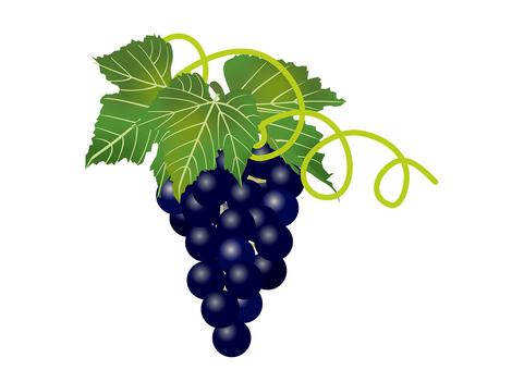 Delicious grape 1