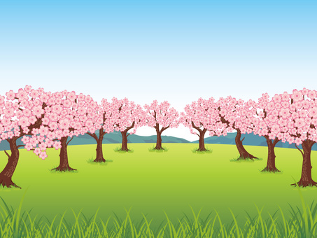 Spring cherry blossoms full bloom background 01