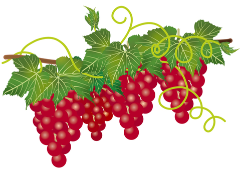 Red Grape 5
