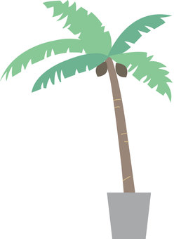 Potted plants - palm tree