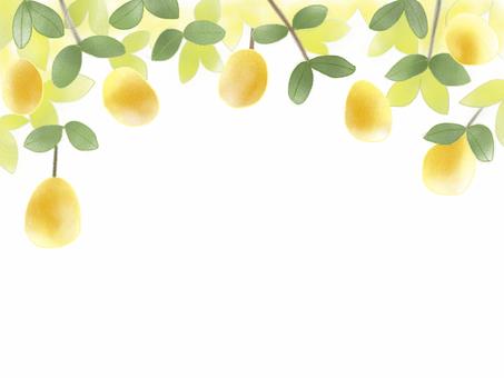 Karin Fruit