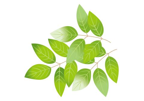 새 잎 5