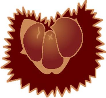 Chestnut -2