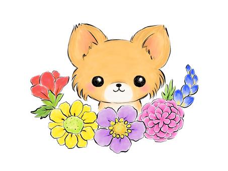 꽃과 치와와