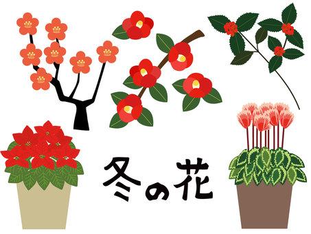겨울의 붉은 꽃
