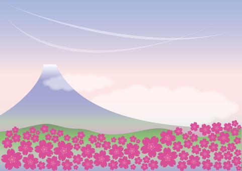 The scenery of Shiba Sakura and Mt. Fuji
