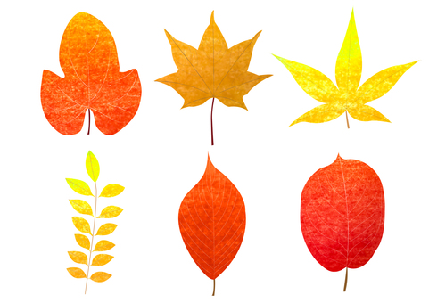 6 kinds of autumn leaves