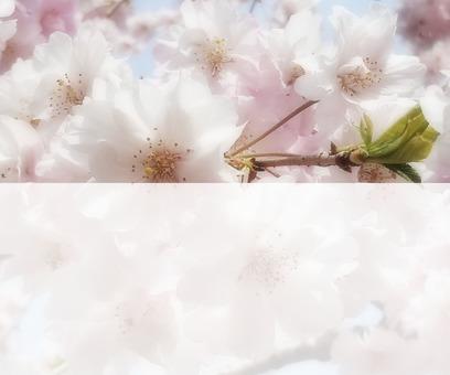 Flower message card 6-B