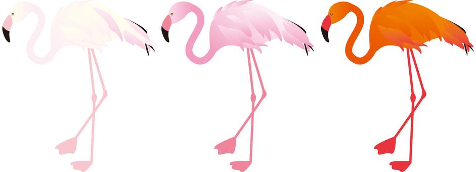 Flamingo _ Three birds