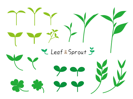 Sprout and leaf set