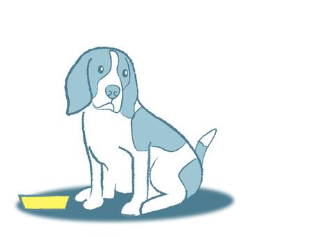 dog_ Beagle dog 6