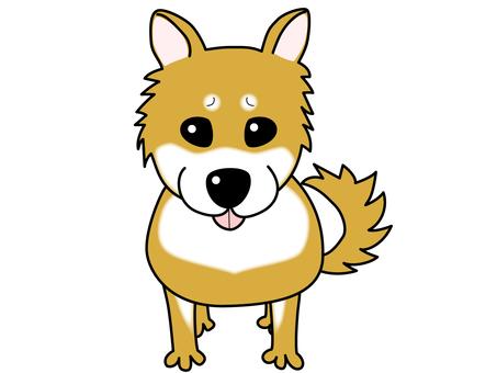 Shiba Inu  - 世界狗