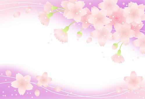 Sakura Frame 16