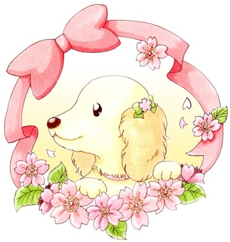 Cherry blossoms and ribbon leasing & dachshund