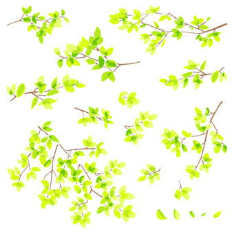Fresh green branches and leaves illustration set