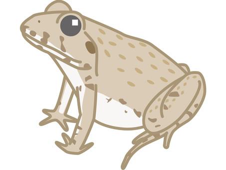 Noma frog