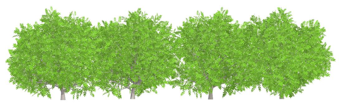 tree_005_hedge_01