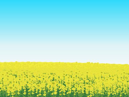 Rape flower's landscape Landscape 05