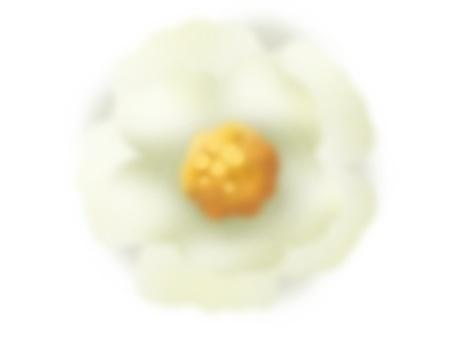 Camellia flower (white)