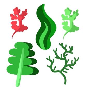 Various kinds of seaweed