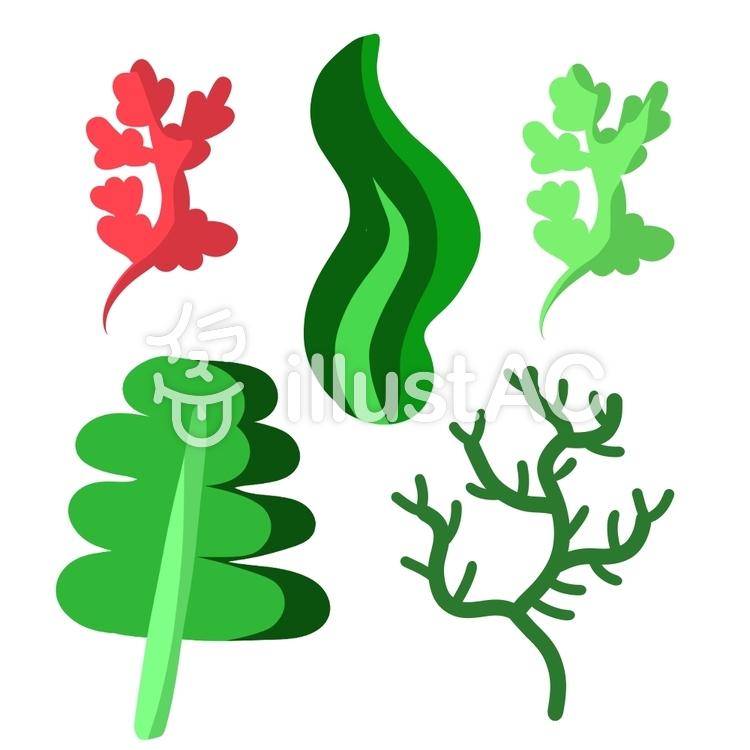 いろいろな種類の海藻イラスト No 1346566無料イラストなら