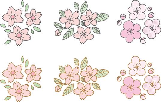 Sakura plum color