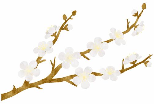 Plum blossom / white plum