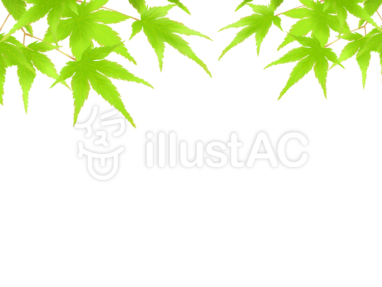清涼感ある緑葉のもみじ