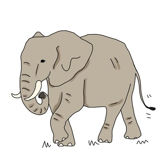 아프리카 코끼리