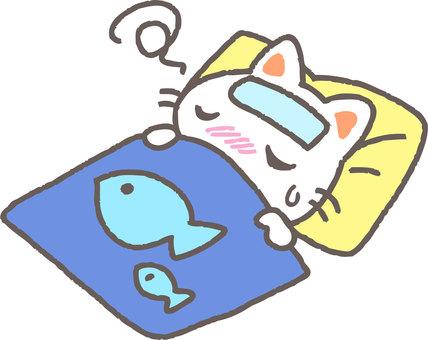 Cat to sleep
