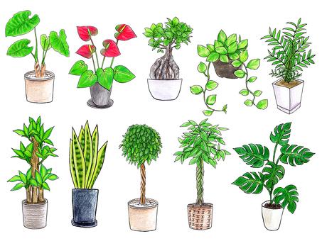 Plant plants summary