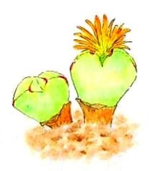 Succulent plants i