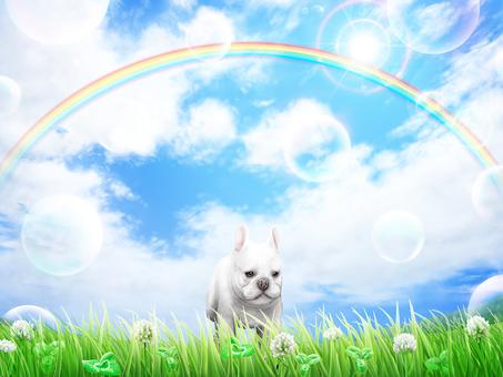 Grass Hakuzo Grass blue sky puppy's bulldog background