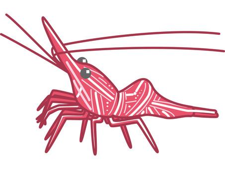 Suzakusarasa shrimp