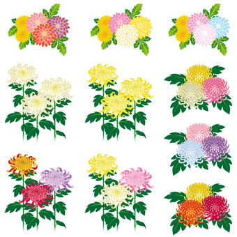 Chrysanthemum bouquet set