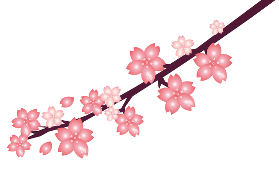 With cherry blossoms