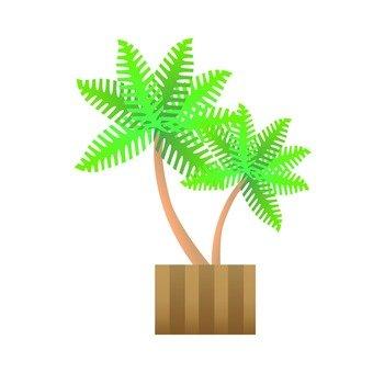 관엽 식물 - 헤고