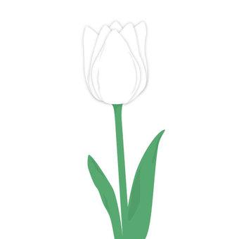 Tulip (white)