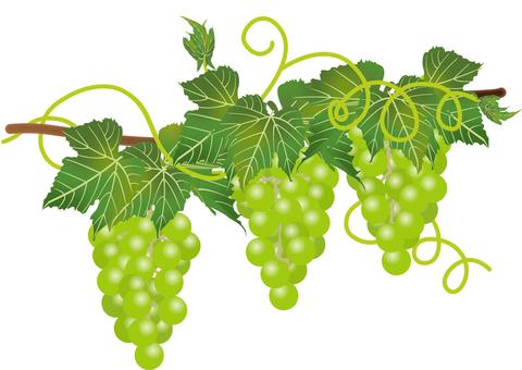 Delicious grape 3