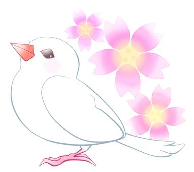 문조와 벚꽃 1
