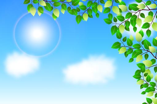 신록 푸른 하늘