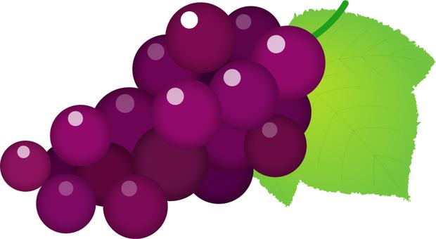 Grape _ purple
